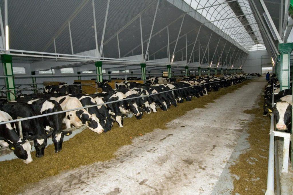 Производство по выпуску сыра фета и греческого йогурта планируют построить в Нижегородской области