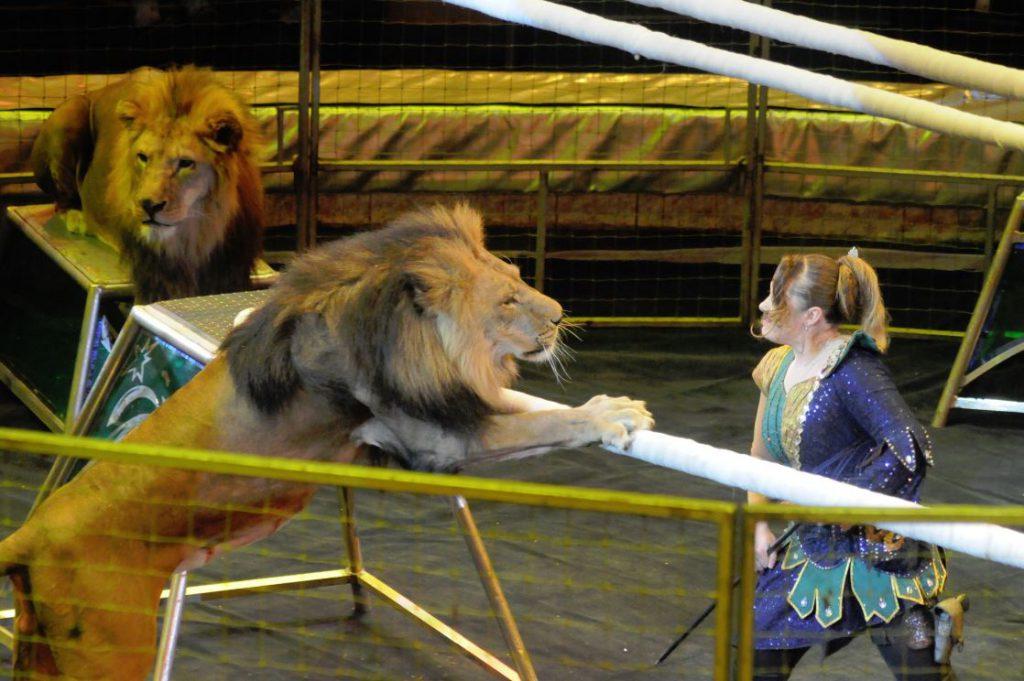 Условия содержания животных проверили в цирке Нижнего Новгорода