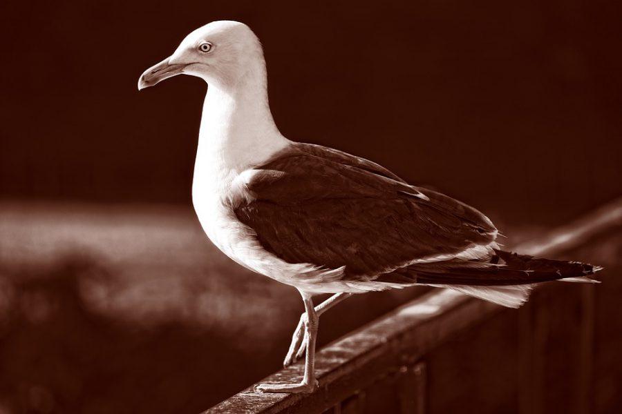Сотрудники нижегородской заправки устроили курорт для чайки