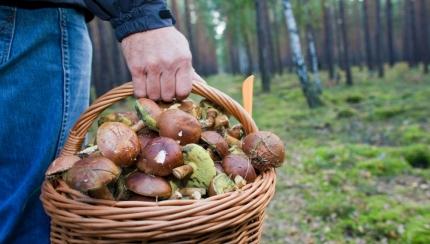 Снимаю шляпу: от каких болезней могут помочь грибы