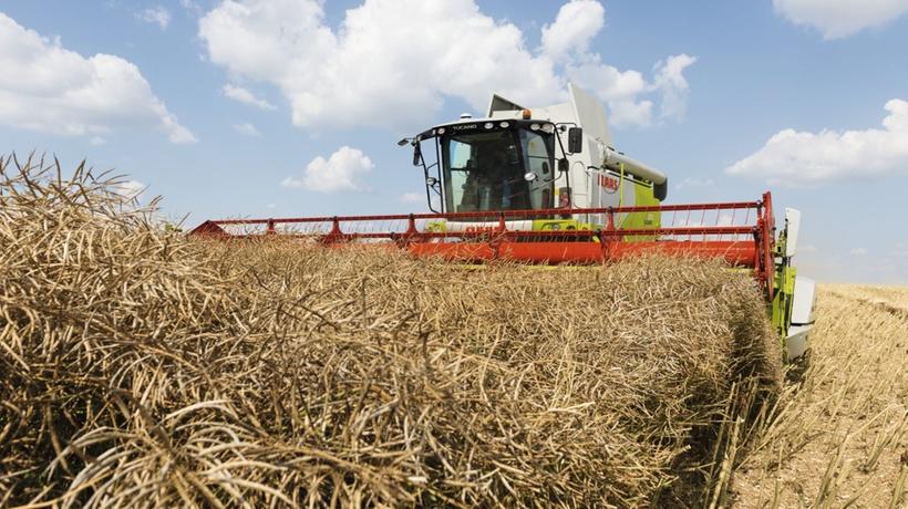 Урожай рапса в Нижегородской области в 2020 году в два раза превысил прошлогодний уровень