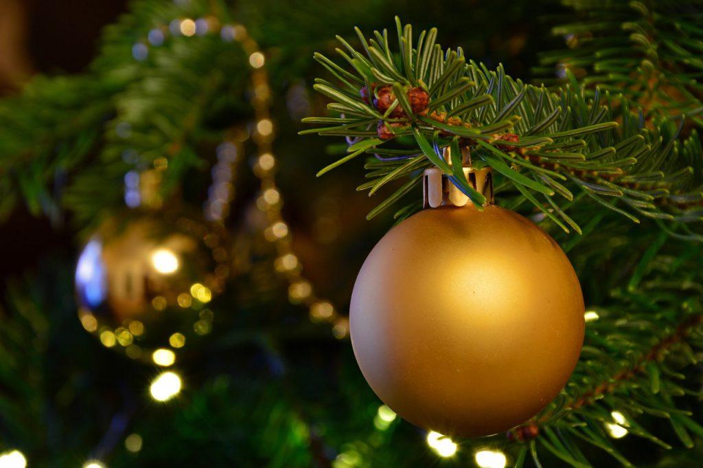 Блестящие, зеленые и гибкие. Как выбрать живую новогоднюю елку