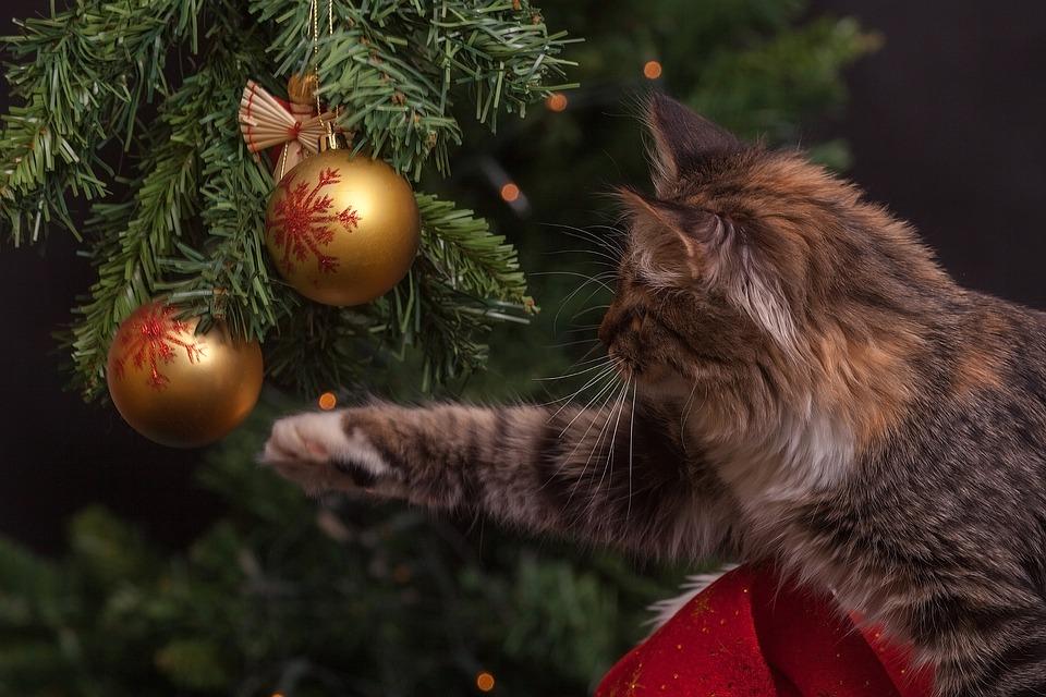 Нижегородка хотела купить ёлку к Новому году, но попала на мошенников