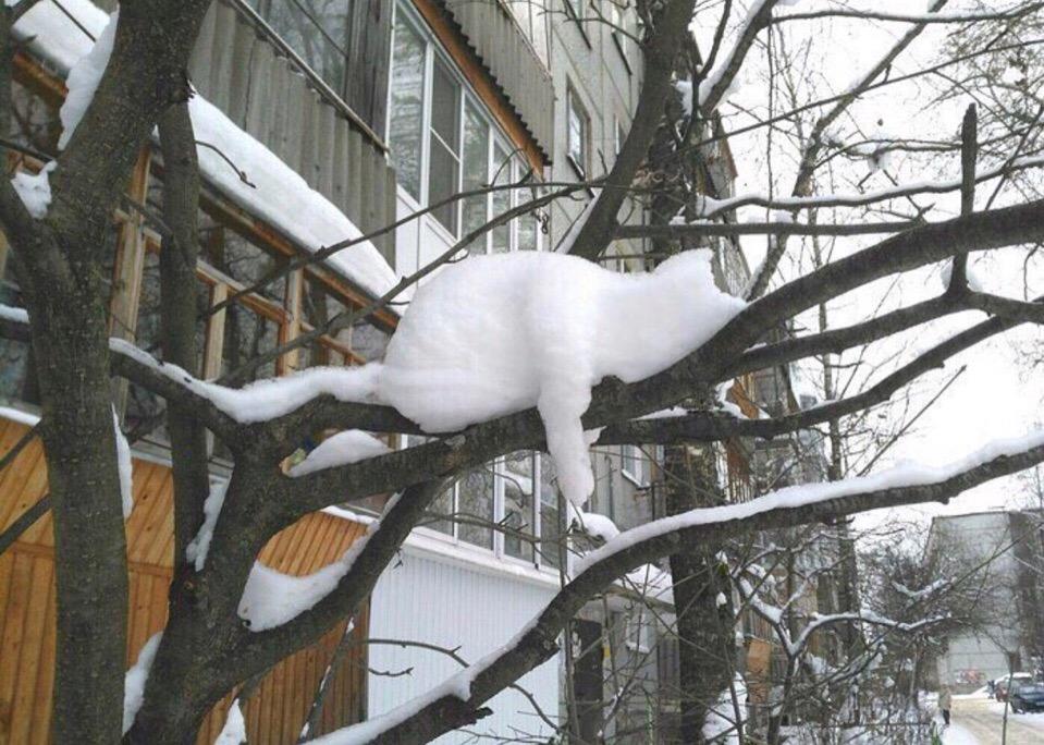 «Снежный кот» уснул на ветке