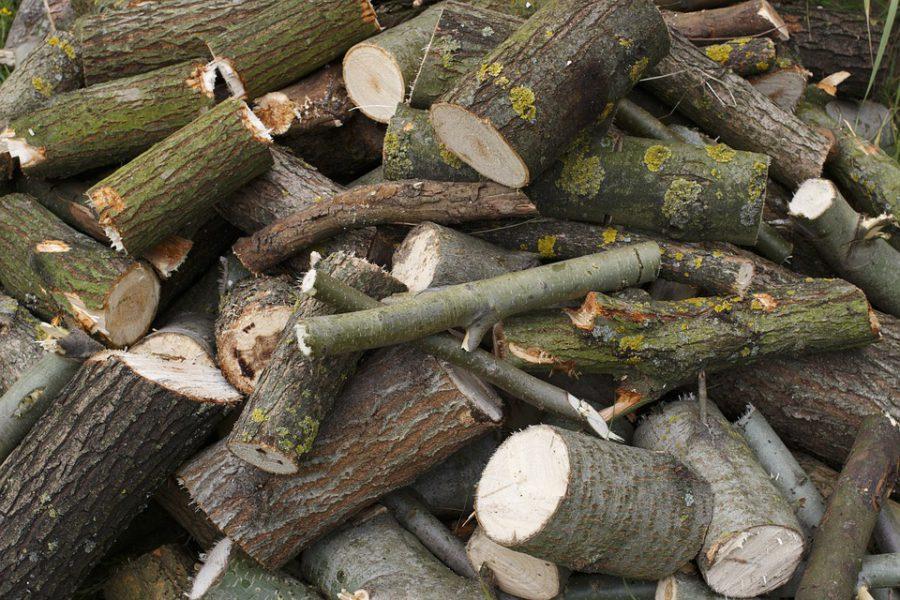 Нижегородец незаконно вырубил деревья в лесу на 130 тысяч рублей