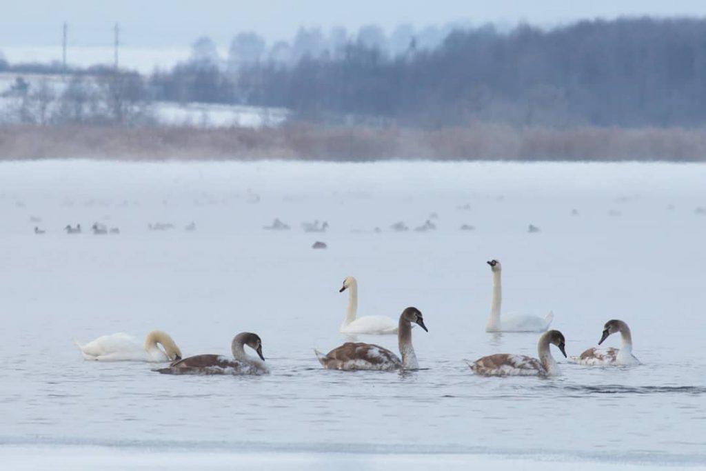 Лебединое озеро в Вадском районе