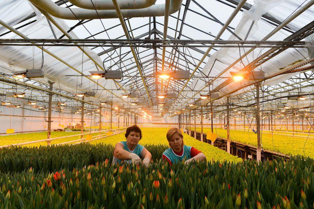 В агрокомбинате «Горьковский» готовятся к весне