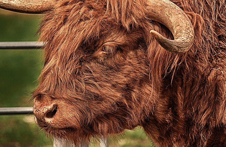 «Власть советов» заплатит пострадавшему от быка фермеру 300 тысяч рублей