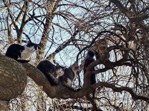 Мартовские коты прилетели