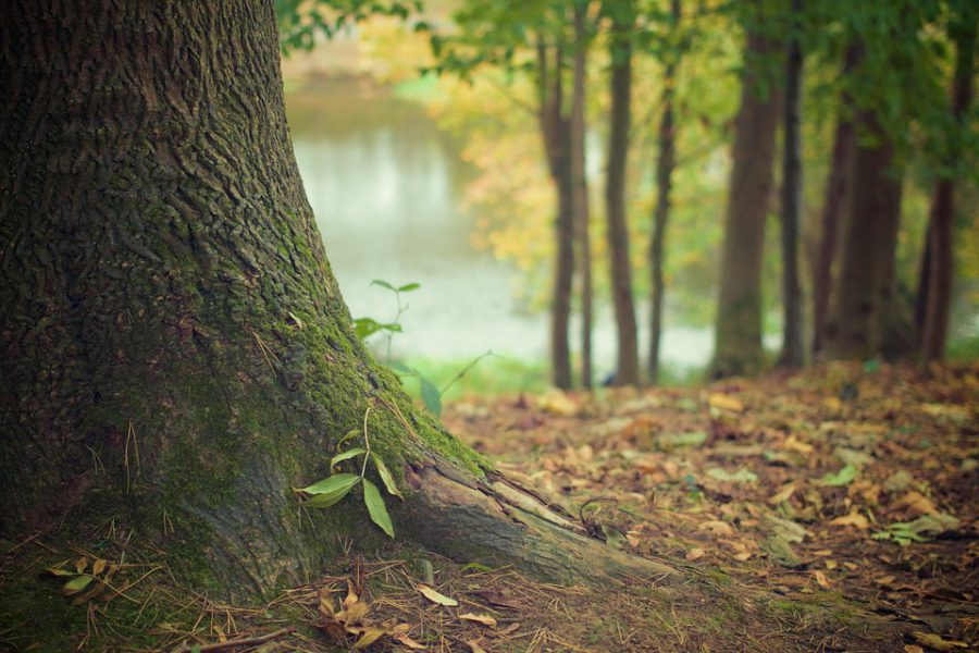 Нижегородская область получит 37 млн рублей на развитие лесного хозяйства