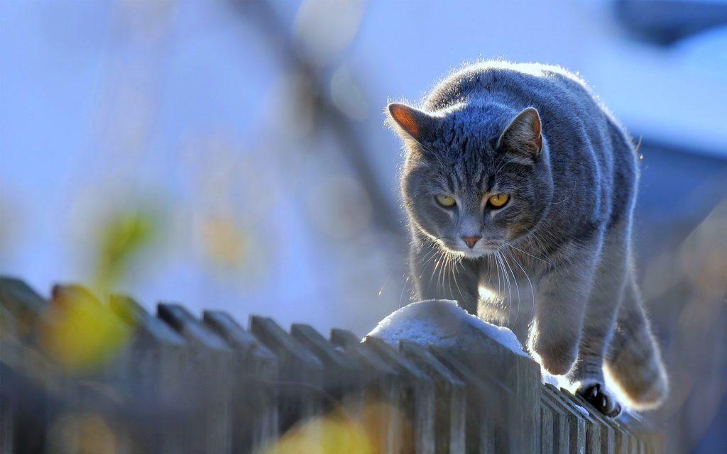 Сюзанна забрала себе мои проблемы со здоровьем: 4 необычные истории из жизни кошек и людей