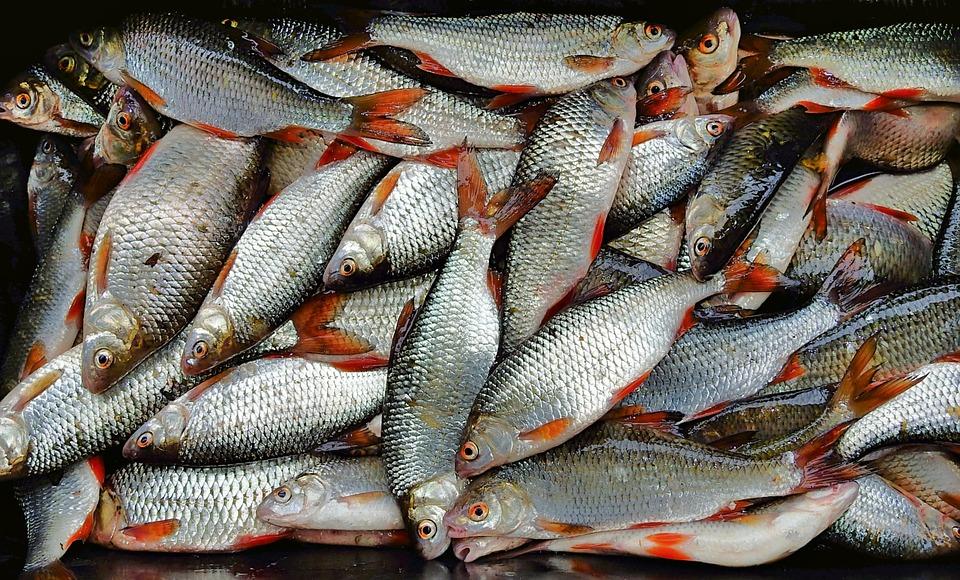 Нижегородец организовал рыбное производство в подвале жилого дома в Сормове