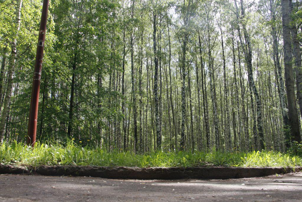 Новые деревья начнут высаживать в парке «Швейцария» в апреле