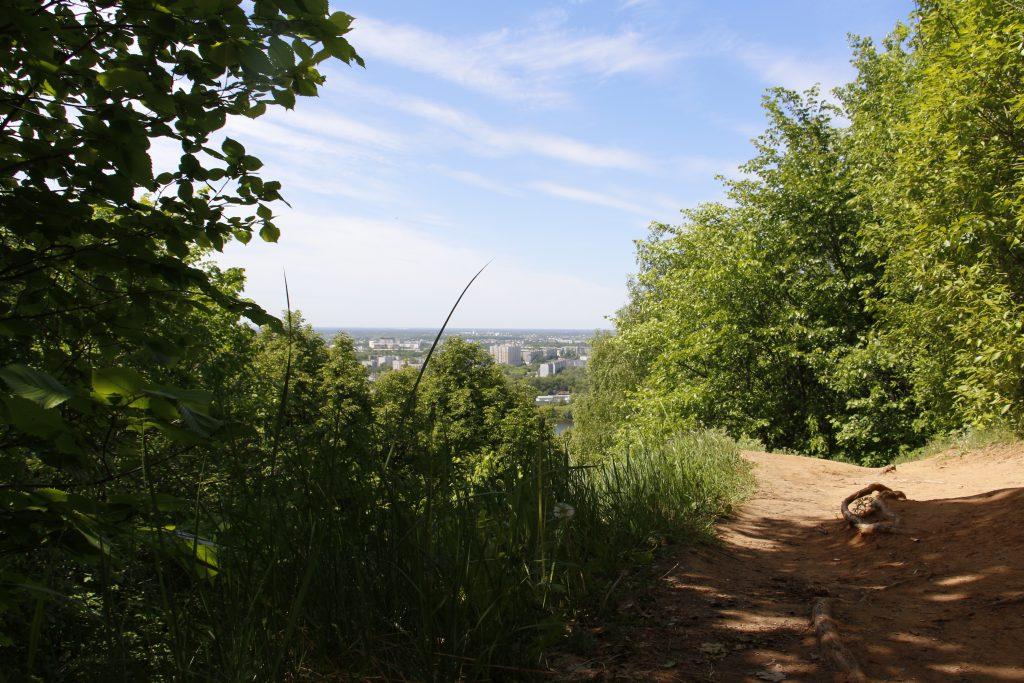 Нижегородские старовозрастные деревья могут стать памятниками живой природы всероссийского значения