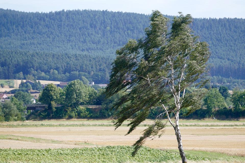 Сильный ветер ожидается в Нижегородской области в ближайшие часы