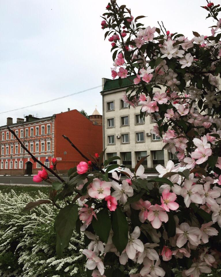 Нижневолжская набережная превратилась в ботанический сад — там зацвела яблоня