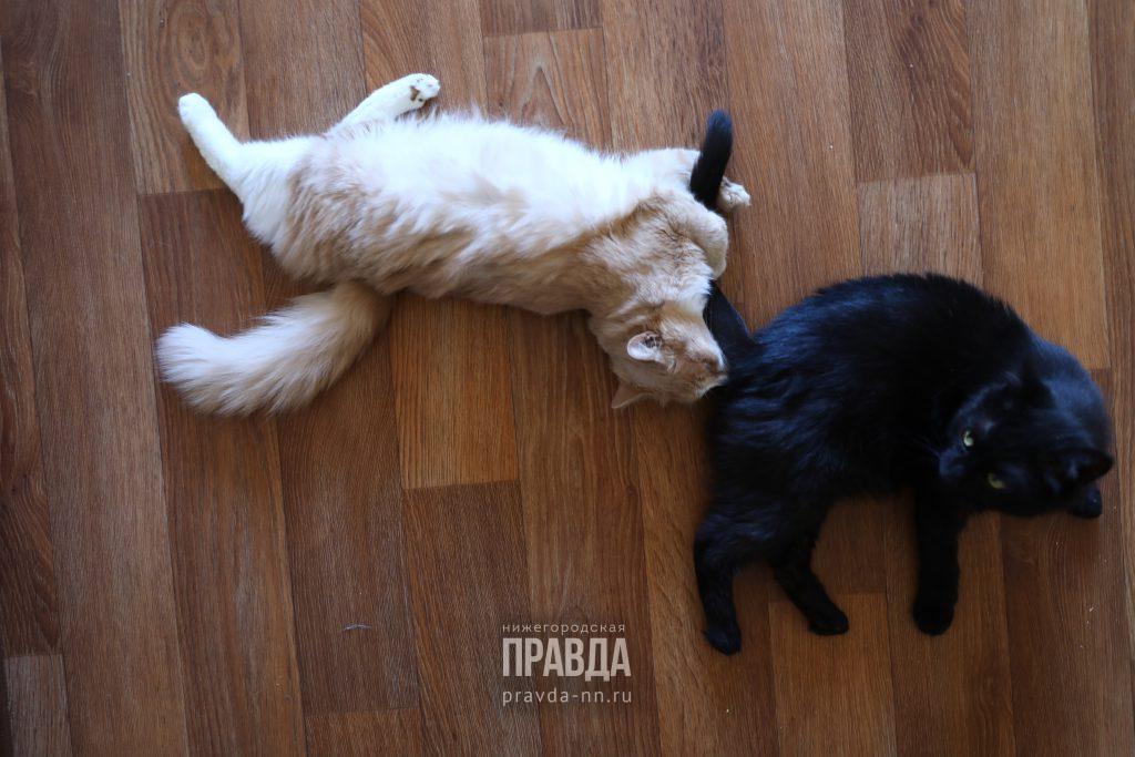 Спрос на услуги зоонянь вырос в Нижнем Новгороде с началом сезона отпусков
