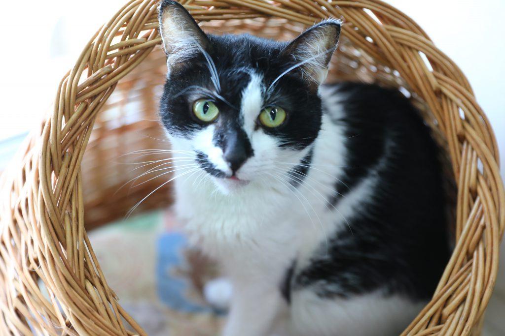 Кошки vs собаки: спрос на домашних животных вырос за время самоизоляции в Нижнем Новгороде