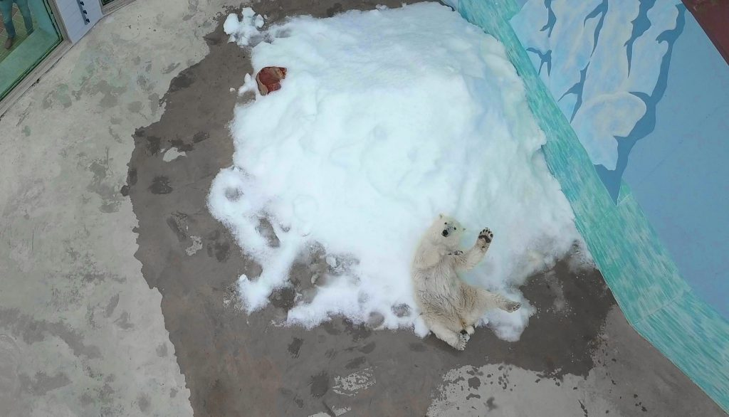 Фото дня. Первый снег для медведицы