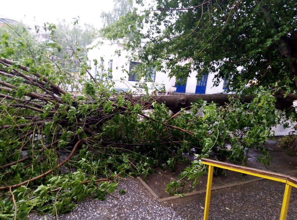 Упавшие деревья и помятые авто. Опубликованы фото последствий урагана в Нижегородской области