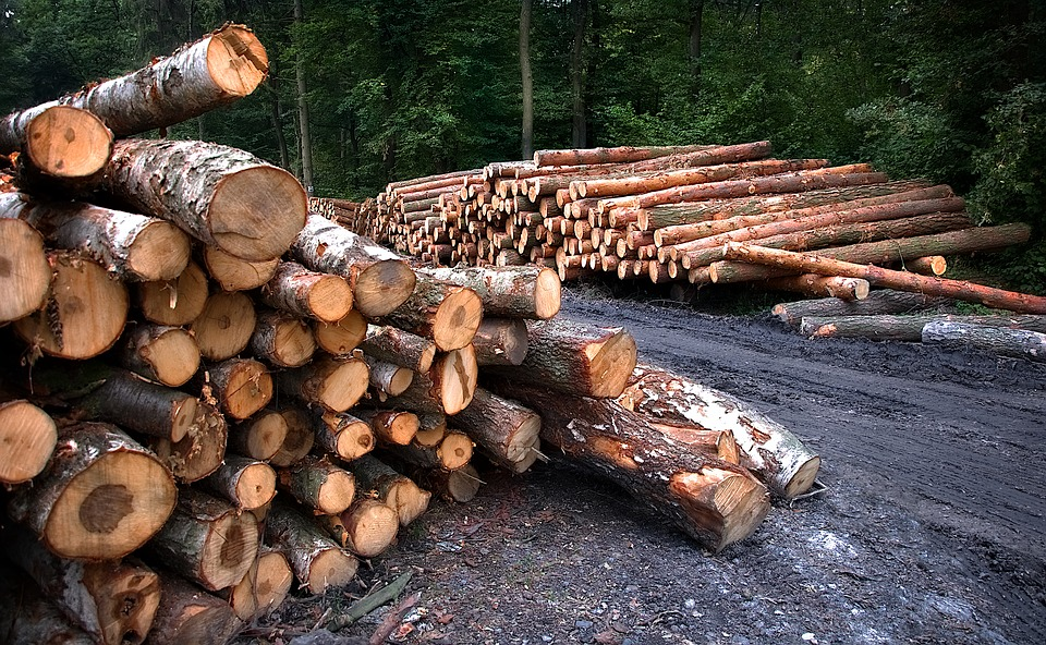 Работник нижегородского лесничества не заметил незаконную рубку леса на 9 миллионов рублей
