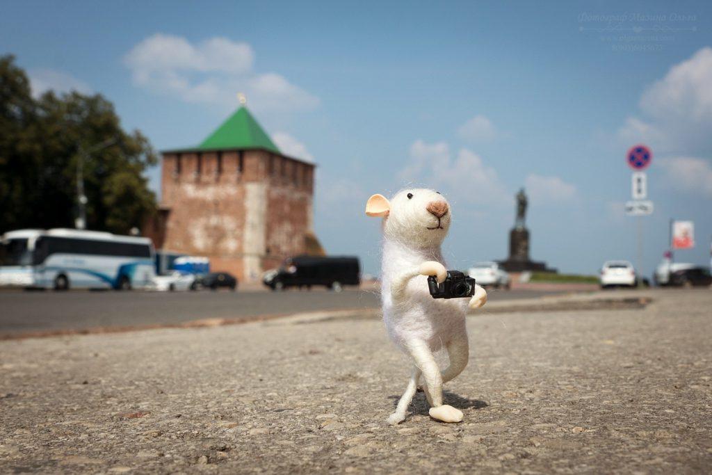 Мышка-путешественница прогулялась по Нижнему Новгороду