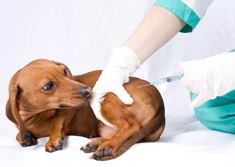 Бесплатная выездная вакцинация домашних животных пройдёт в Приокском районе
