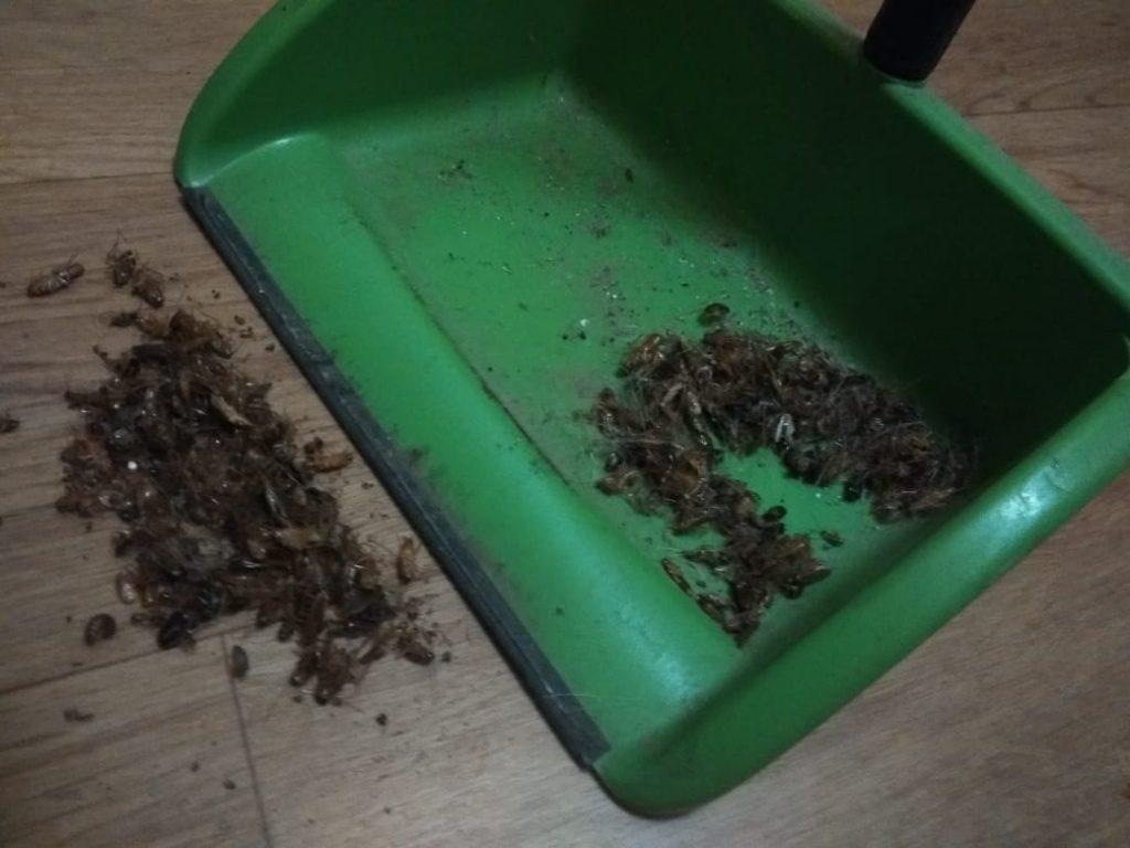 На нижегородку, которая подбросила в ДУК тараканов, подали заявление в полицию