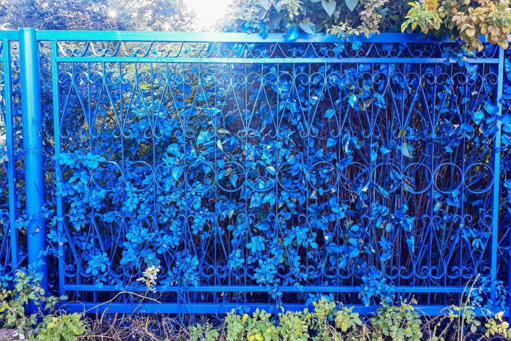 Забор около школы в Выксе выкрасили в синий цвет вместе с кустами