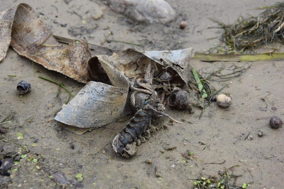 Пластик везде: волонтёры Greenpeace спасли речного рака, который запутался в ленте на берегу Оки