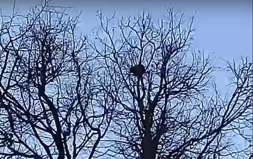 Нижегородцы сняли с дерева кота, который просидел там пять дней