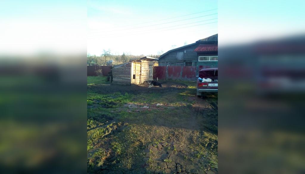 Полиция проверяет информацию о расстреле собак в Семёнове (18+)