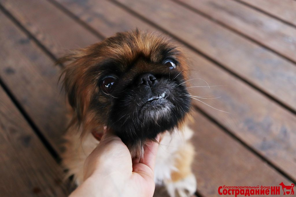 Ветеринары из Нижнего Новгорода спасли брошенную хозяевами собаку от опухоли