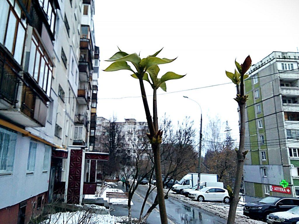 Почки и листья появились на деревьях в Нижнем Новгороде