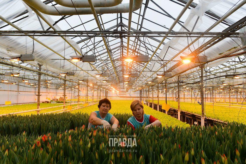 непродовольственные товары первой необходимости перечень 2020 насекомых тюльпаны совхоз горьковский