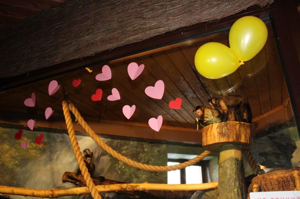 Гипотенуза, Цезарь и Клёпа: какие животные в зоопарке Лимпопо отпраздновали День всех влюбленных