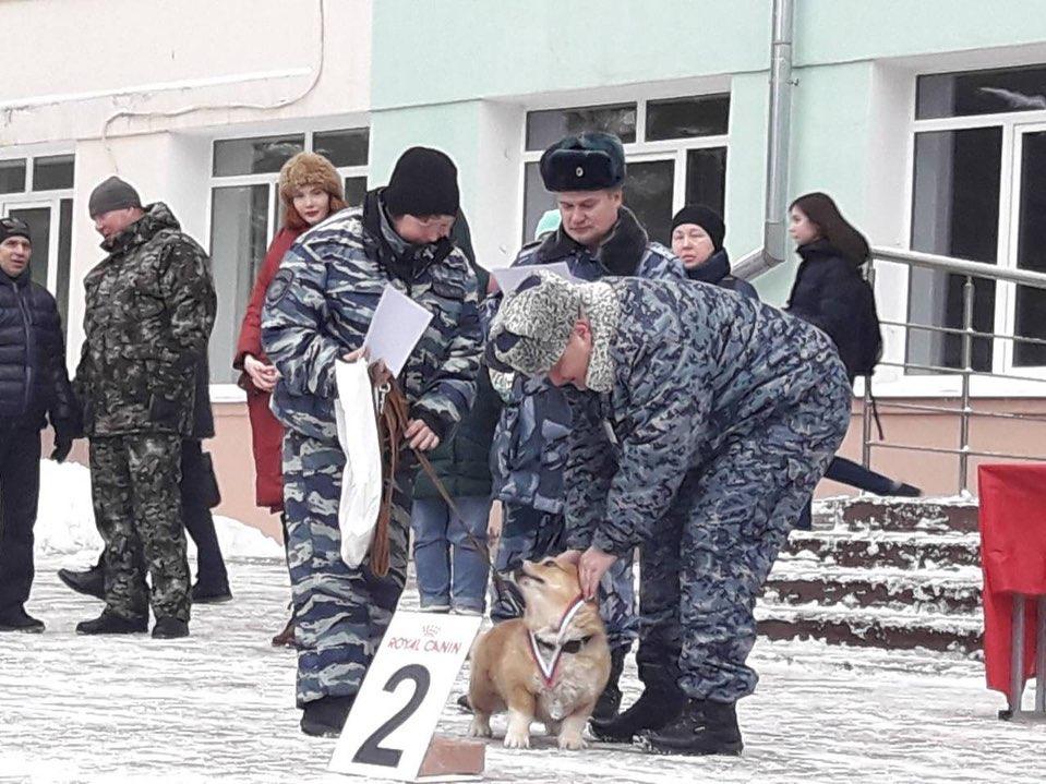 «Чемпионы наших сердец»: Корги-полицейский занял второе место в областных соревнованиях