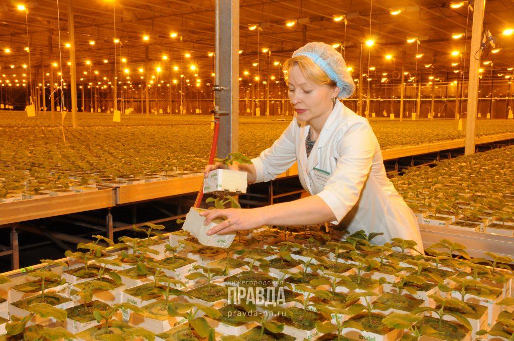 Нижегородские сельхозпроизводители выходят на зарубежные рынки: выясняем, как это повлияет на экономику региона