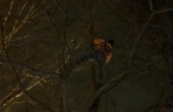В Автозаводском парке спасли кошку, просидевшую на дереве три дня