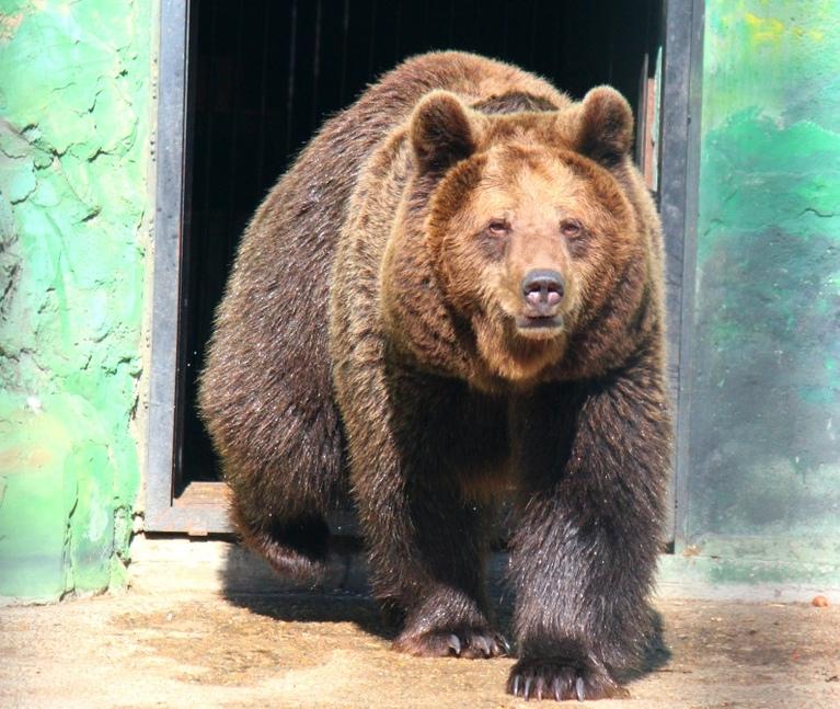Тройня медвежат родилась в зоопарке «Лимпопо» (ВИДЕО)
