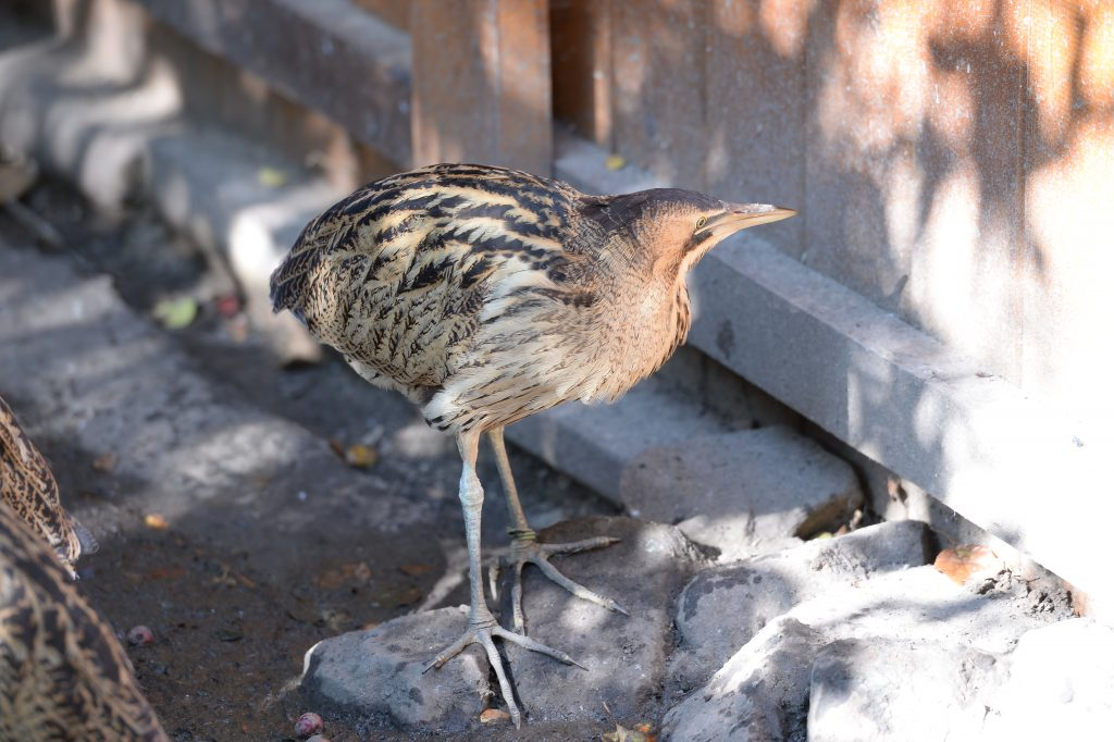 Сотрудники зоопарка «Лимпопо» рассказали о птицах, которых спасли в прошлом году