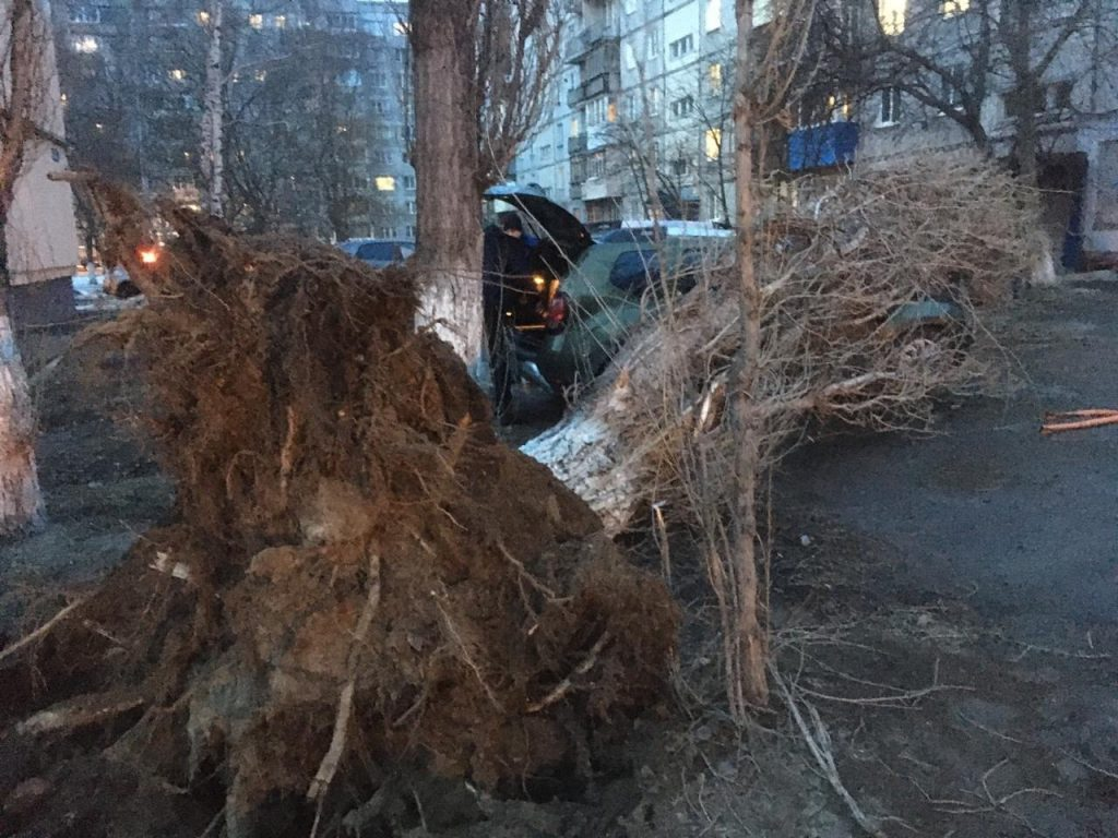 Из-за сильного ветра три машины придавило упавшим деревом на Автозаводе