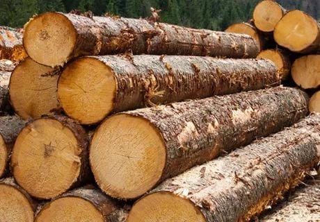 Замначальника колонии в Тоншаевском районе отправил заключенного продавать древесину