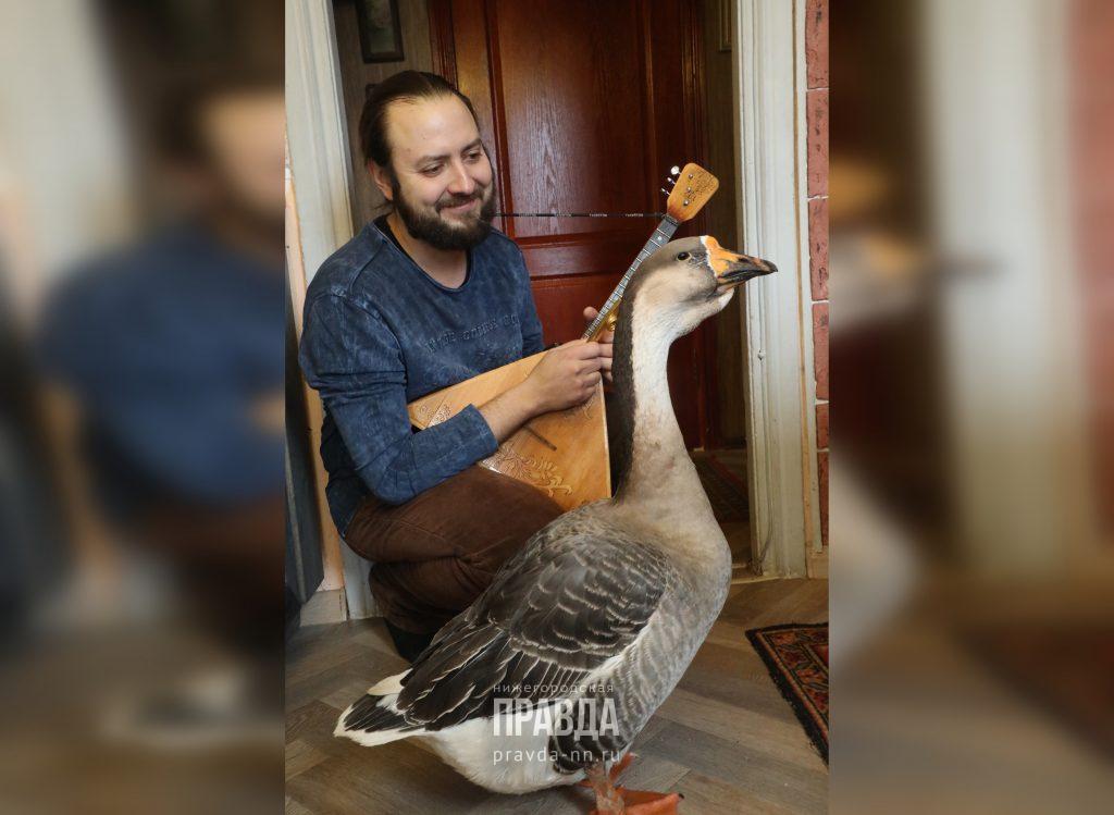 «Гусыня очень любит блины и петь под гусли»: хозяева музыкальной птицы рассказали о своей необычной питомице