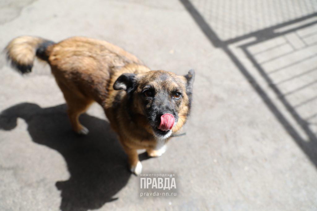 Правда или ложь: жителей будут штрафовать за лай собак?