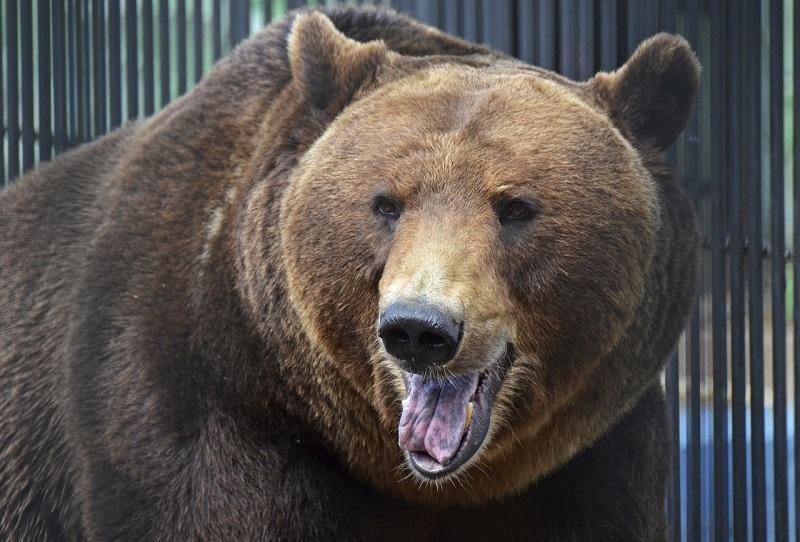 Животные зоопарка «Лимпопо» выходят из зимней спячки