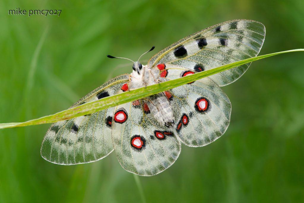 Михаил Ростропович: «Я сфотографировал около 700видов бабочек прямо насвоем дачном участке»