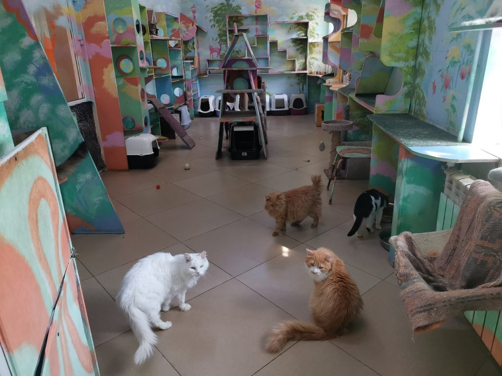 Нижегородскому приюту для животных требуется помощь