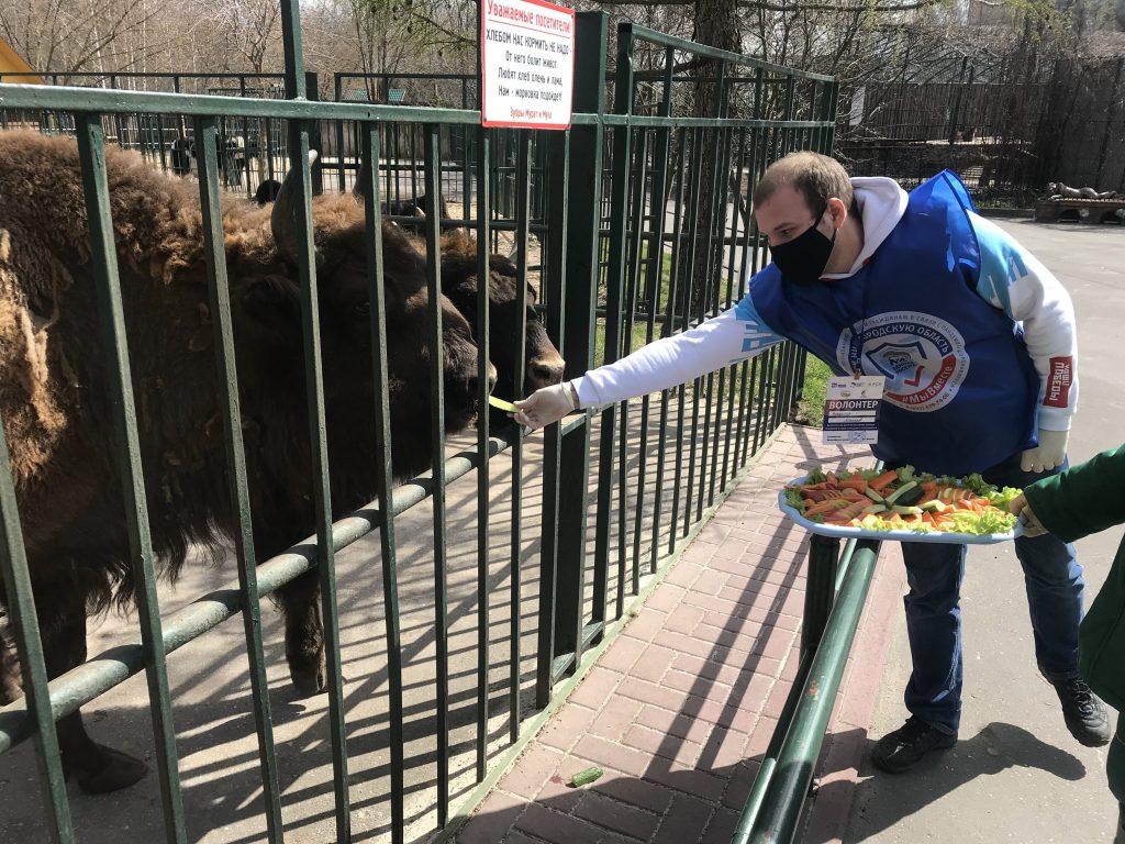 Нижегородские волонтеры и общественники передали корм для животных в зоопарки «Мадагаскар» и «Лимпопо»