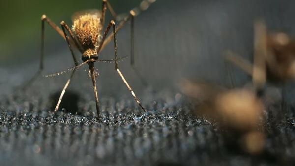 Комары атакуют нижегородцев по пути в Городецкий район